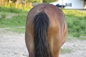 image of horses ass  - the backside of a horse - JPG