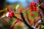 Thorny Branches And Red Flowers Against A Fuzzy Background poster