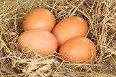 Fresh Freerange Eggs