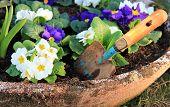 Primel Blüte und kleine Schaufel
