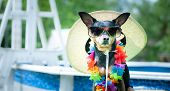 Theme Of Summer And Rest. Funny Dog In Glasses And A Hat By The Pool Resting, Looking Into The Camer poster