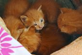Blurred Top View Of Cute Small Kittens In The Box. Stray Kittens Outdoors. Animals Day, Animals Resc poster