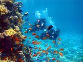 Two Divers Among Fish