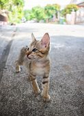 Cute Little Kitten Standing Outdoor. Tabby Funny Kitten With Brown Eyes. Animal Baby Theme. poster