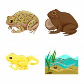 Isolated Object Of Frog And Anuran Logo. Collection Of Frog And Animal Vector Icon For Stock. poster