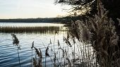 Reed Grass At The Coast Of Lake Plauer See Idyllic Landscape poster