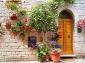 Flowers of Assisi