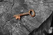 Rusty Key On Log