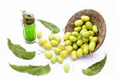 Fresh Green Neem Fruit Of Indian Lilac Fruit In A Clay Bowl Isolated On White Along With Its Concent poster
