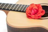Love Song. Red Rose On Acoustic Guitar. Romantic Music Concept. Close Up Of Beautiful Flower On Qual poster