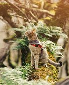Traveler Tabby Cat Of Ginger Color In Bandana Walking In The Forest Outdoor. poster