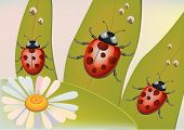 Beetles.EPS