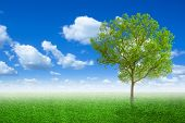 Lone Tree In A Meadow With On Green Field Or Spring Tree In Green Field Of Grass And Blue Sky On Bac poster