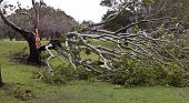 Fallen Tree, Storm Damage