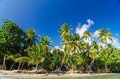 Palm Tree Costa