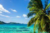Paisaje marino y palmera