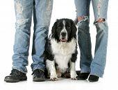 Familienhund - Mann und Frau stehend mit ihren Hund zwischen ihnen isoliert auf weißem Hintergrund