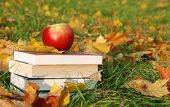 foto of fall leaves  - Back to school concept with a stack of books and apple