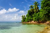 Costa verde exuberante