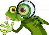 foto of glass frog  - illustration green frog with big eyes and a magnifying glass - JPG