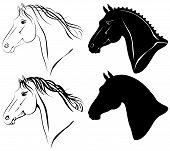 Conjunto de cabeza de caballo