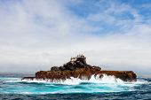 Rock with sea birds off the coast of Galapagos Isabela island, Ecuador