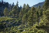 Sierra Nevada Forest