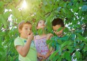 Children Eating Bing Cherries