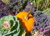 Kale And Pumpkin