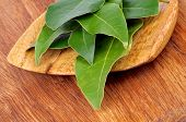 Bay Laurel Leaves