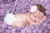 Beautiful newborn baby little sleeping on purple rose blanket