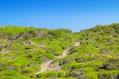 Cami de Cavalls walking path going through green hills of Menorca island, Spain. It encircles the wh
