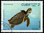 Vintage  Postage Stamp. Lepidochelys Kempi.