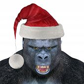 picture of gorilla  - Gorilla Wearing Santa Hat  - JPG