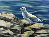 Seagull resting on some rocks near to the sea. Digital illustration.