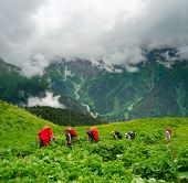 Young hikers trekking in Svaneti, Georgia