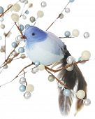 A feathery blue bird sitting in the branches of silver, blue and frosty white berries.  Shallow dept
