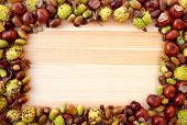 picture of beechnut  - Fall detritus of beechnuts horse chestnuts and acorns form a rectangular frame on a wooden background with copy space - JPG