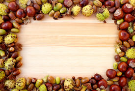 foto of beechnut  - Fall detritus of beechnuts horse chestnuts and acorns form a rectangular frame on a wooden background with copy space - JPG