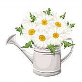 Bouquet of daisies in watering can. Vector illustration.