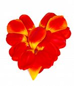 Heart From Petals Of Red Tulips