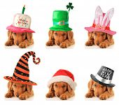 A puppy for every occasion. Birthday, St Patrick's, Easter, Halloween, Christmas and New Year.