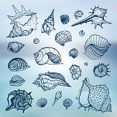 Sea shells set.  Blurred background.