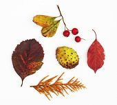 Autumn Leaves, Rosehip, Horse Chestnut And Twig