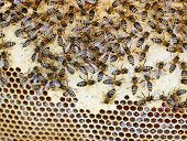 stock photo of swarm  - swarm of bees in the hive with honeycombs