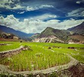 Vintage retro hipster style travel image of rice field terraces (rice paddy). Near Cat Cat village,