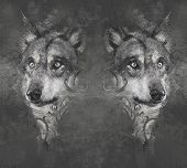 picture of north american gray wolf  - Wolf illustration - JPG