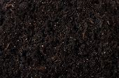 Black Ground Close Up