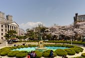 SEOUL, KOREA-APRIL 18: Students are walking at the campus which is lined with cherry trees of full b
