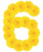 Number 6 Made From Dandelion Flower